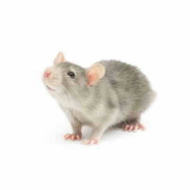 mouse-small-ppc image